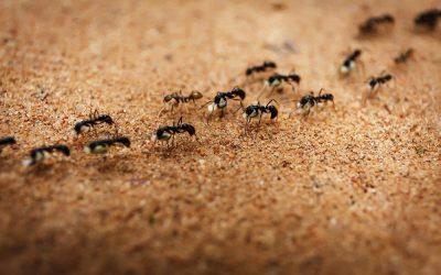 Meer over mieren