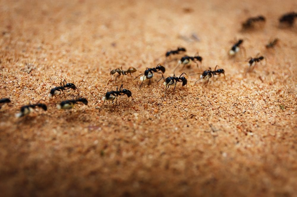 mieren-kolonie-zand
