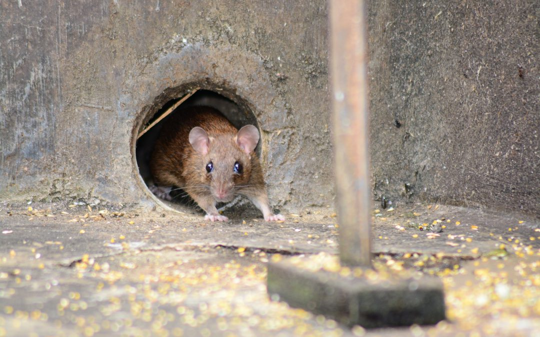 Meer over muizen
